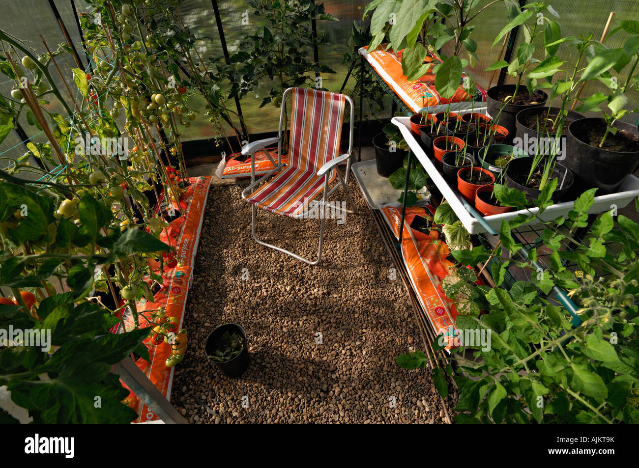 innenraum des kleinen gew chshaus mit tomaten gurken und anderen pflanzen wachsen in wachsen. Black Bedroom Furniture Sets. Home Design Ideas