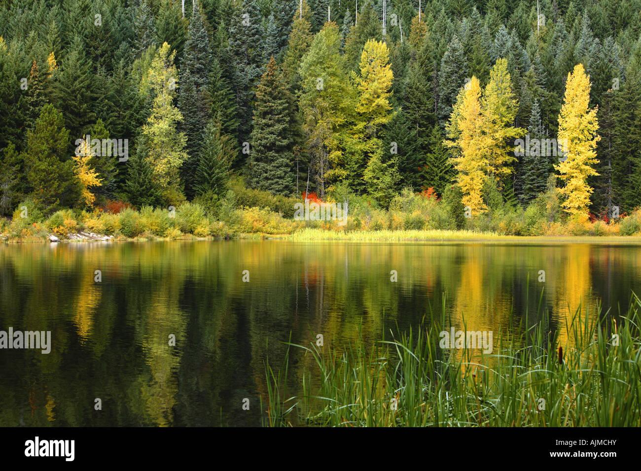 Fallen Sie farbige Bäume im See widerspiegelt Stockbild