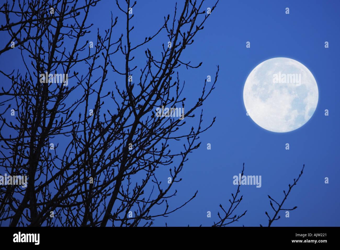 Vollmond vor Abendhimmel Stockbild