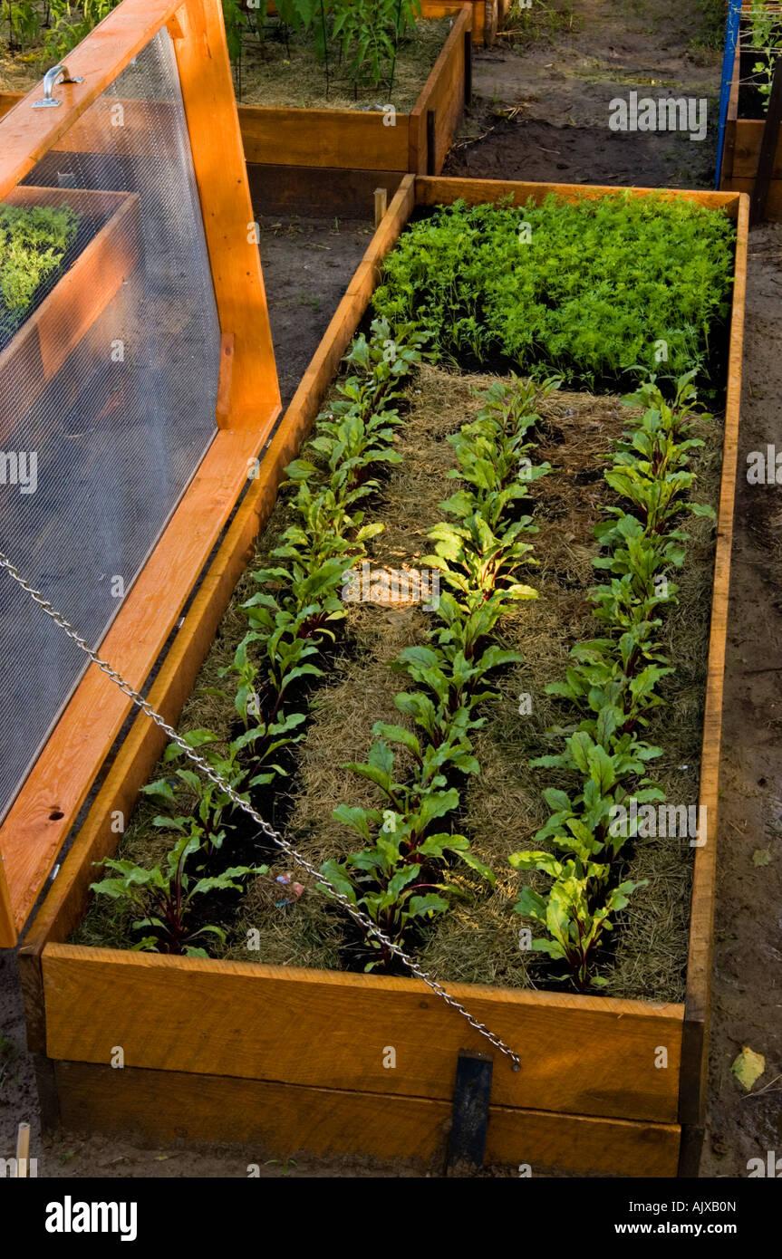 Gemuse Garten Hochbeeten Lasagne Garten Mit Abgeschirmten