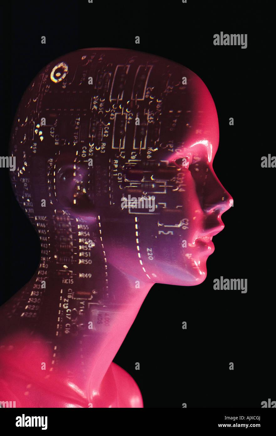 Cerebral Diagram Stockfotos & Cerebral Diagram Bilder - Alamy