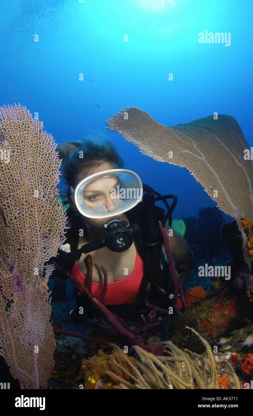 Scuba Diver Bimini Stockfotos & Scuba Diver Bimini Bilder - Alamy