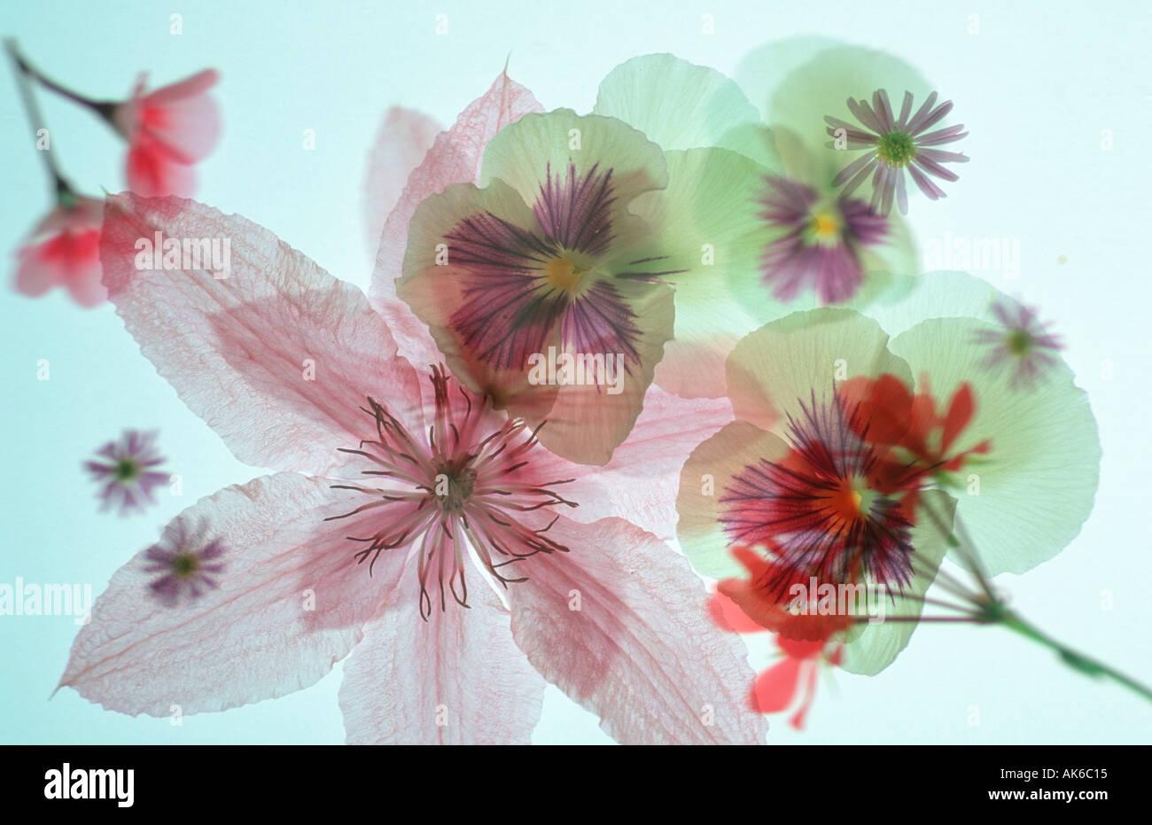Blüten blueten abstrakt Abstrakt Stockbild