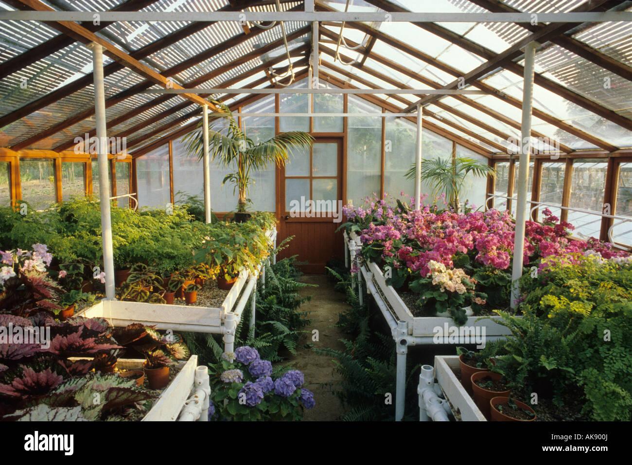 Schattenliebende Pflanzen garten berkshire große gewächshaus mit lattenrost dach