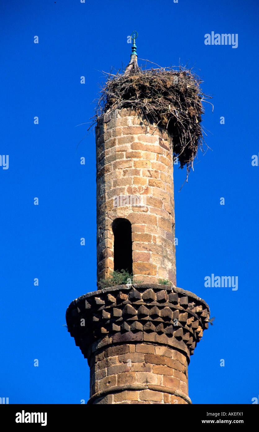 Griechenland, Zuge, Genissea Bei Xanthi, Silberdistel Auf Verfallendem Minarett Stockbild