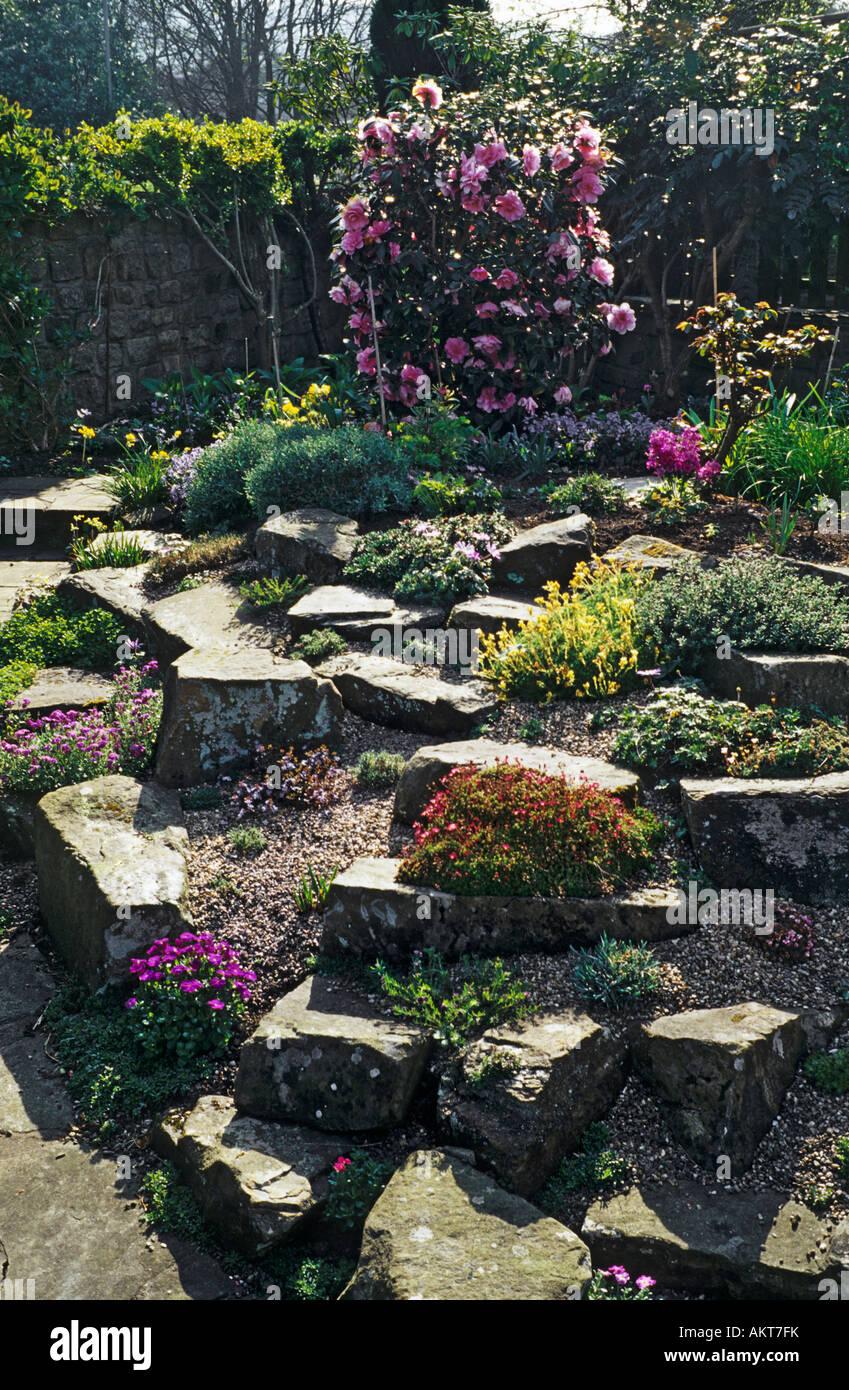 Ein Kleiner Rhododendron Ist Ein Wesentliches Merkmal In Einer Kleinstadt  Steingarten Garten Im Frühjahr
