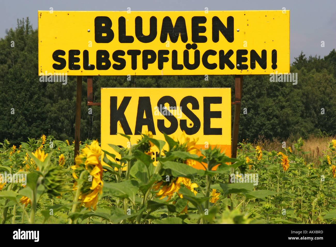 Gro e gelbe tafel werbung selbst pfl cken von sonnenblumen for Gelbe tafel