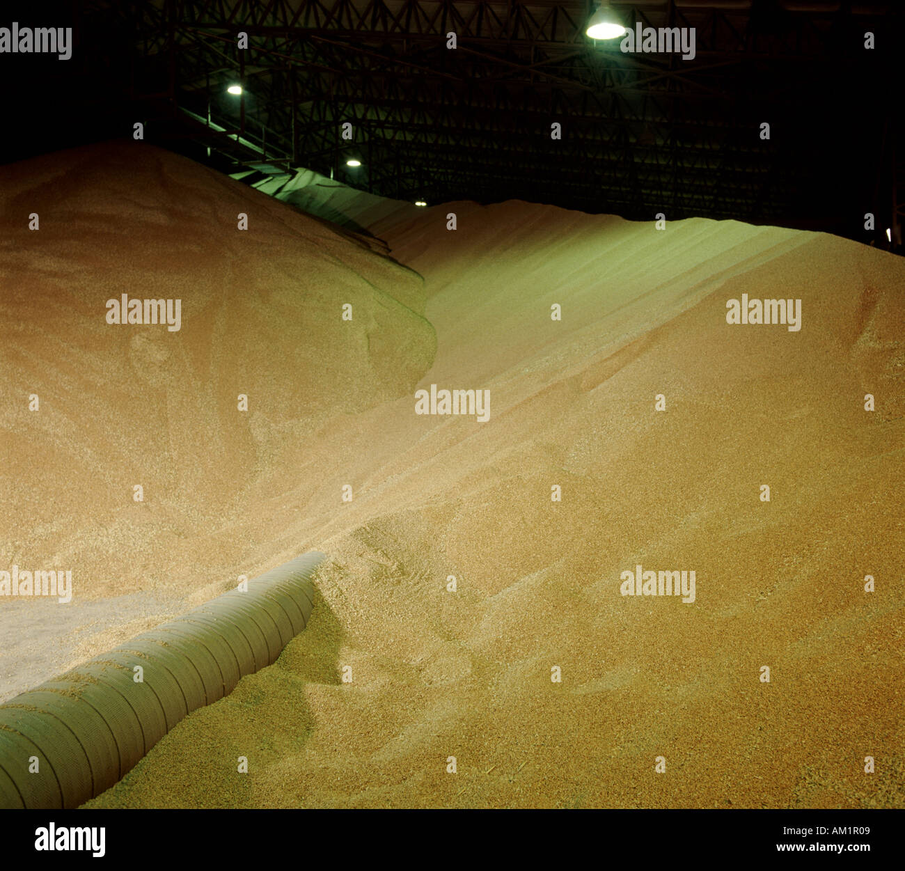 Blick von Getreide in großen Körnern Lagerung Aufhänger Stockbild