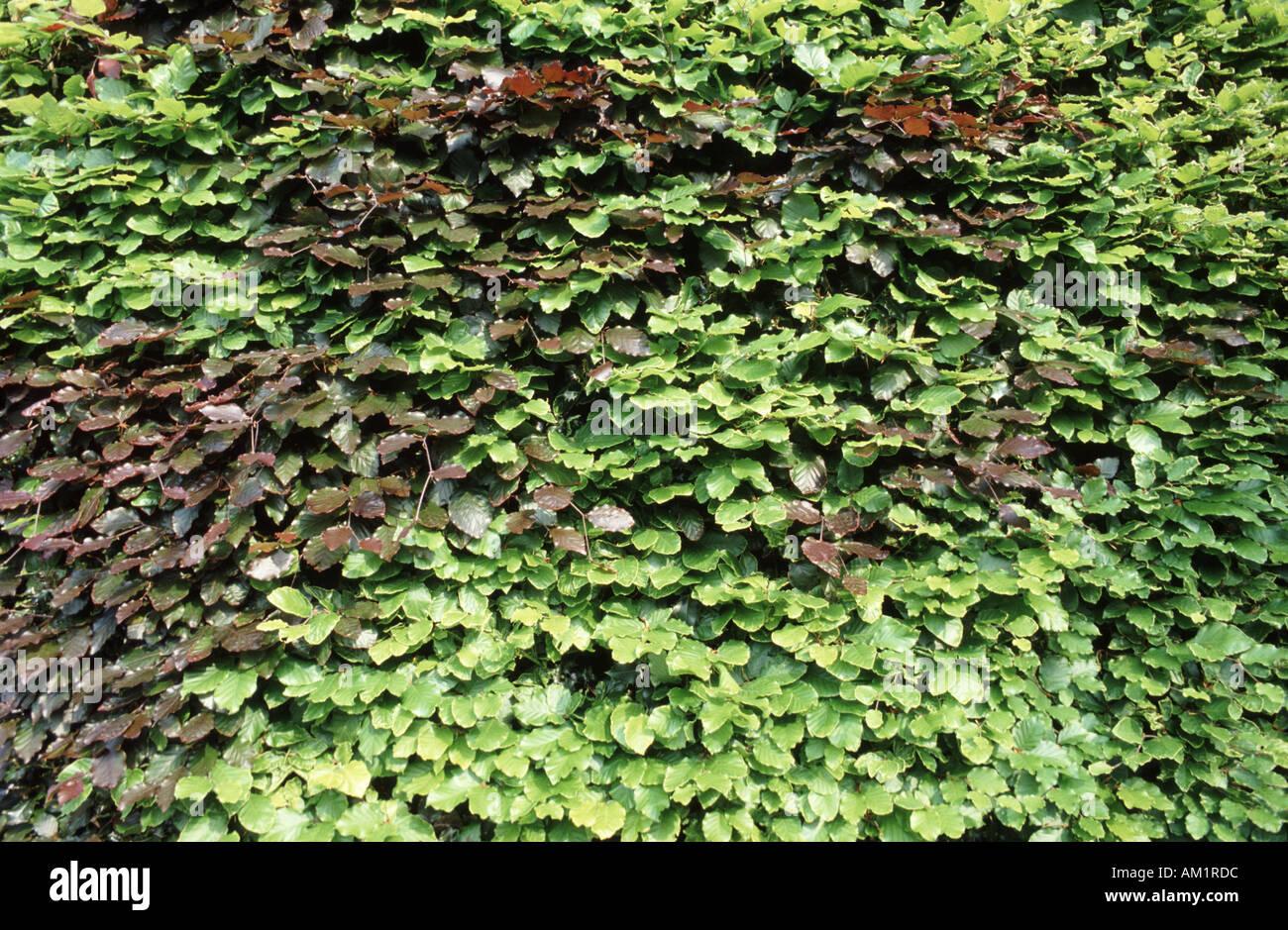 green copper stockfotos green copper bilder alamy. Black Bedroom Furniture Sets. Home Design Ideas