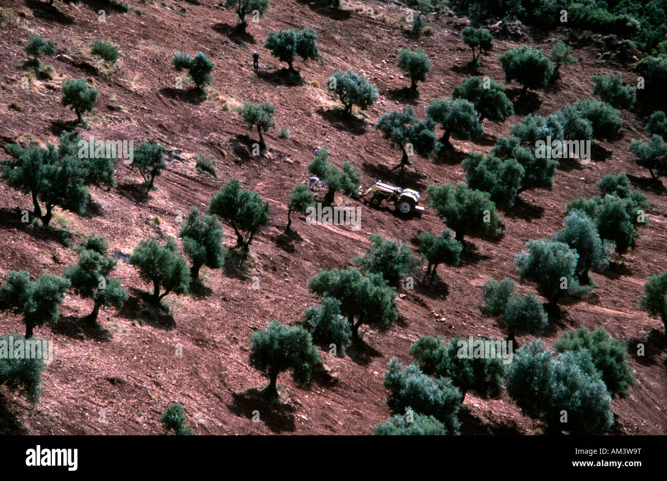 olive groves jaen stockfotos olive groves jaen bilder seite 2 alamy. Black Bedroom Furniture Sets. Home Design Ideas