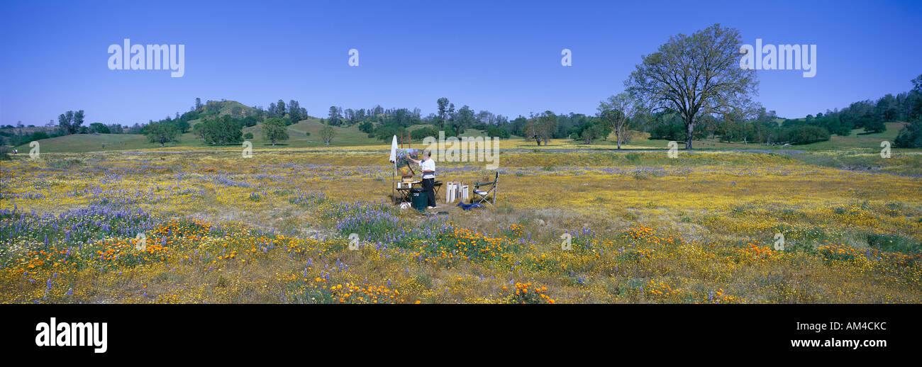 Panoramablick von Frühlingsblumen aus Route 58 auf Shell Creek Road westlich von Bakersfield, Kalifornien Stockbild