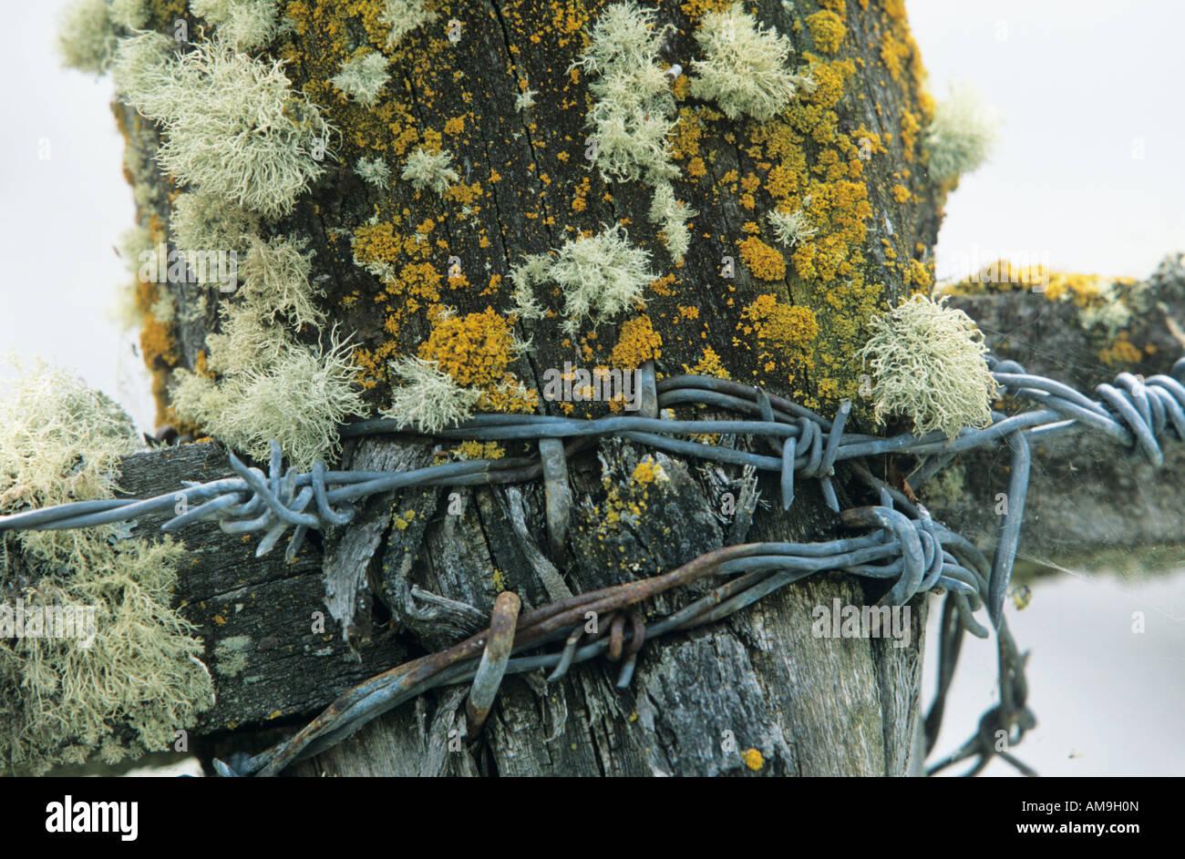 Moos Und Flechten Auf Zaun Mit Stacheldraht Stockfoto Bild