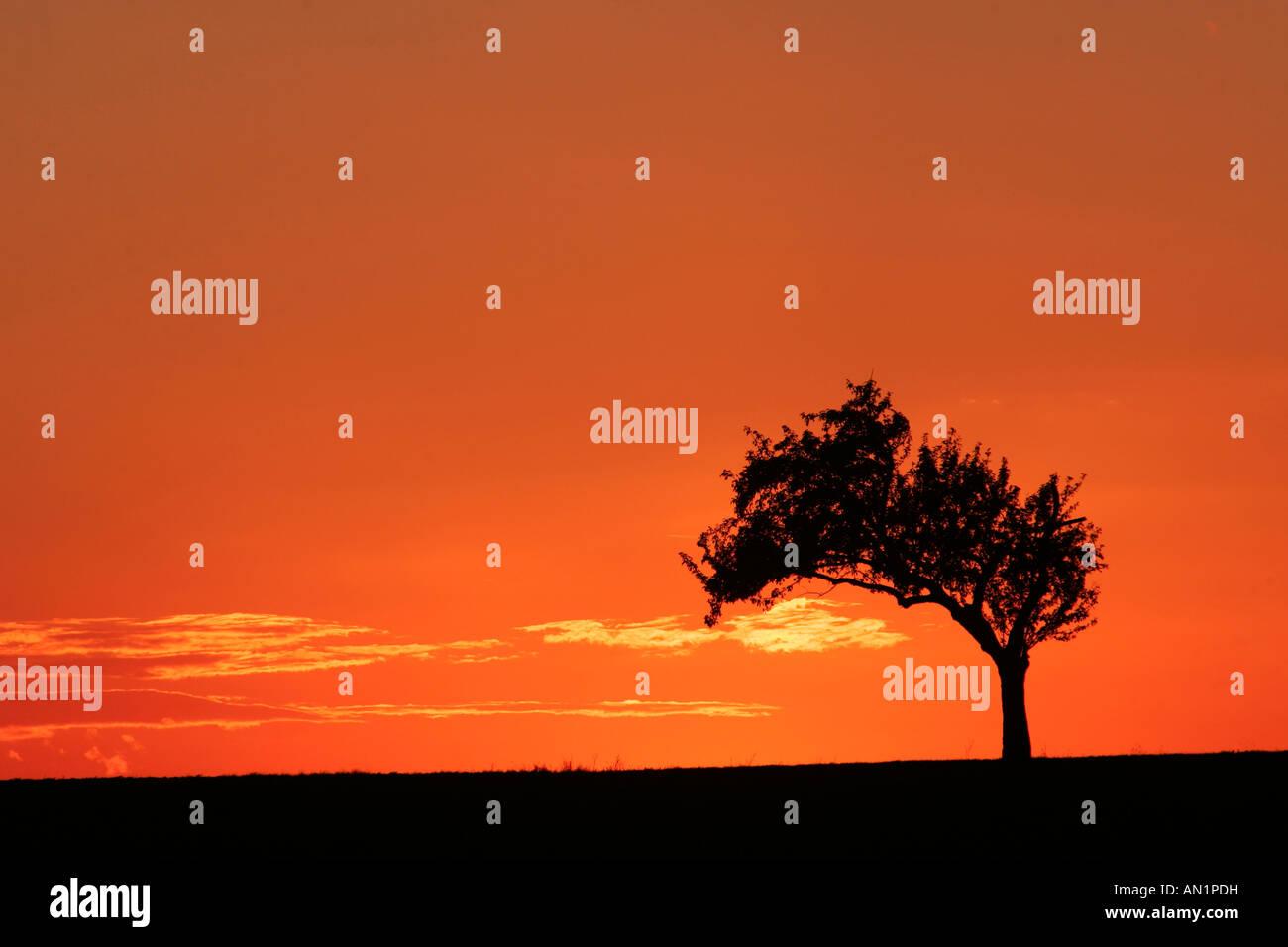 Baum Im Raummotive Baum im Sonnenuntergang Stockbild