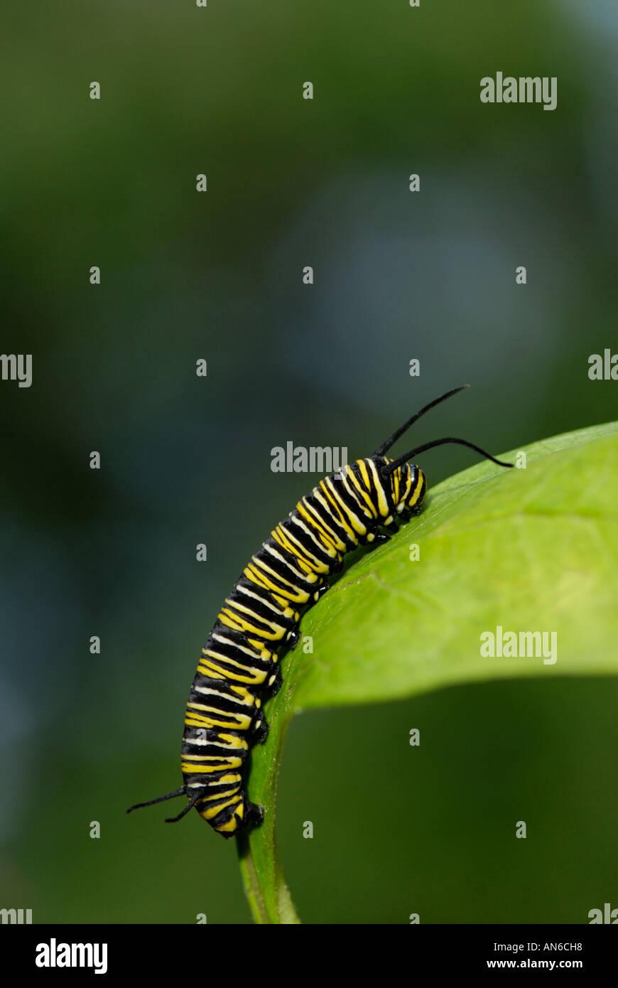 Aposematic Coloration Stockfotos & Aposematic Coloration Bilder - Alamy