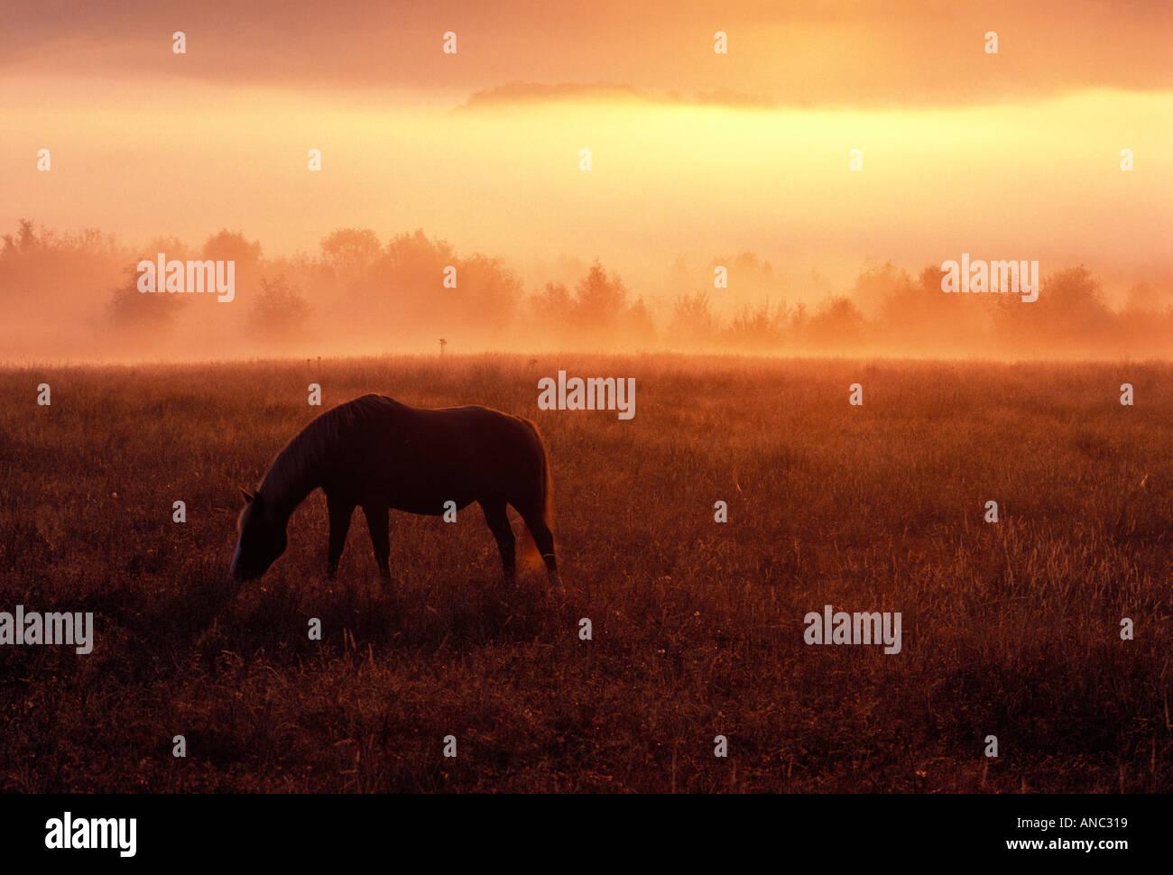 F00022 Tiff Pferd in Pature bei Sonnenaufgang mit Nebel in der Nähe von Monroe Oregon Stockbild