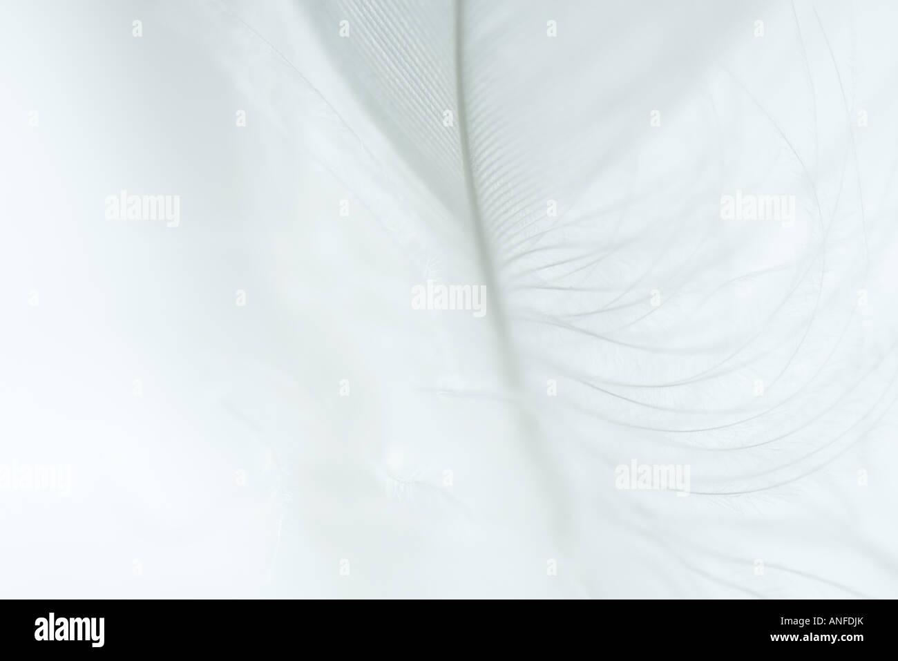 Weiße Feder vor weißem Hintergrund Stockbild