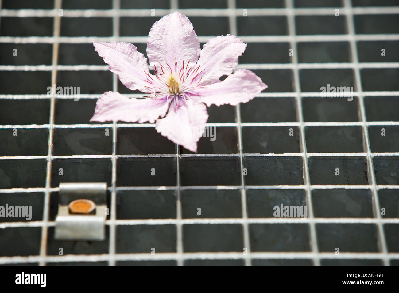 Blume auf Metallgitter Stockbild