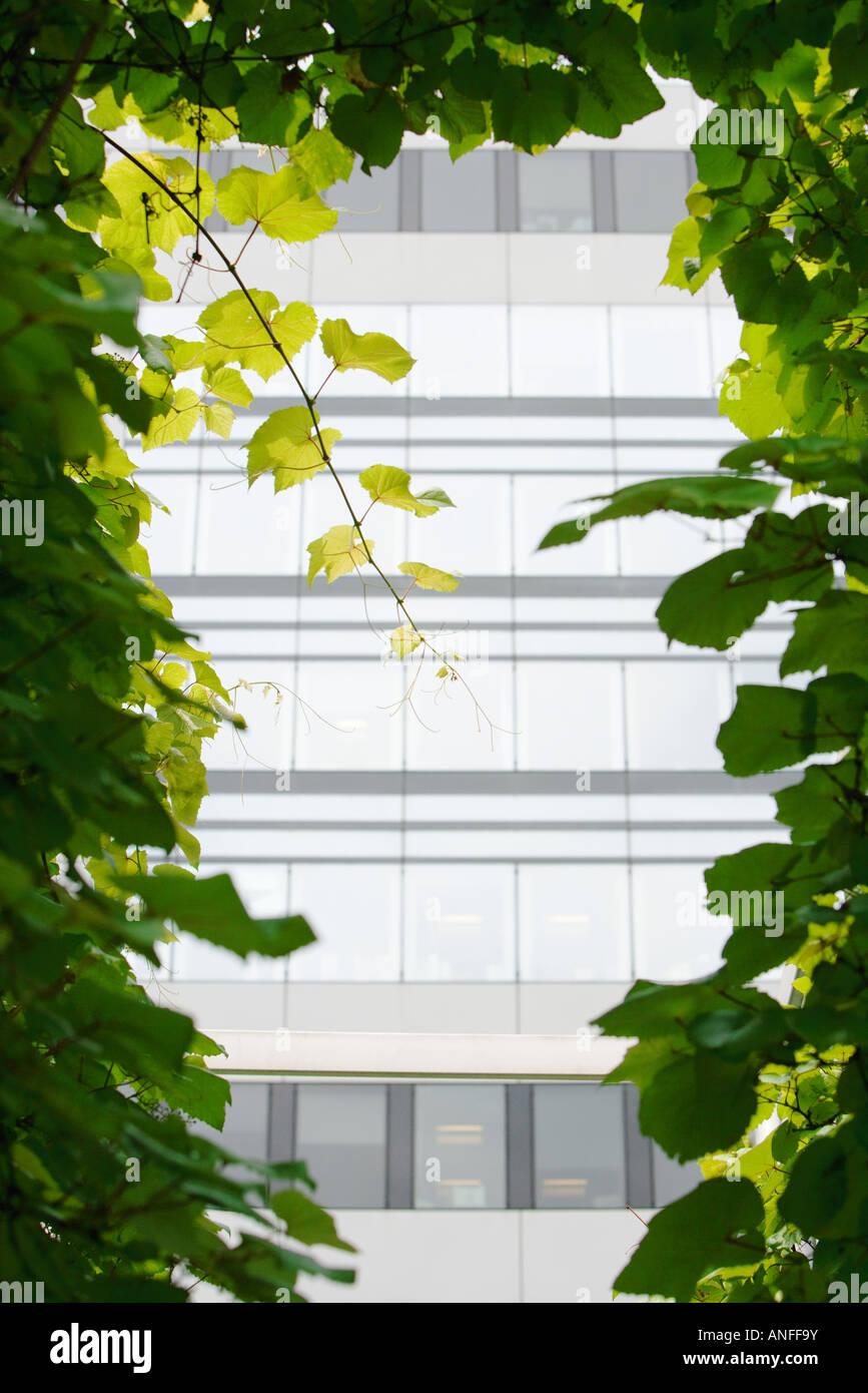 Bürogebäude, die durch Weinberge gesehen Stockbild