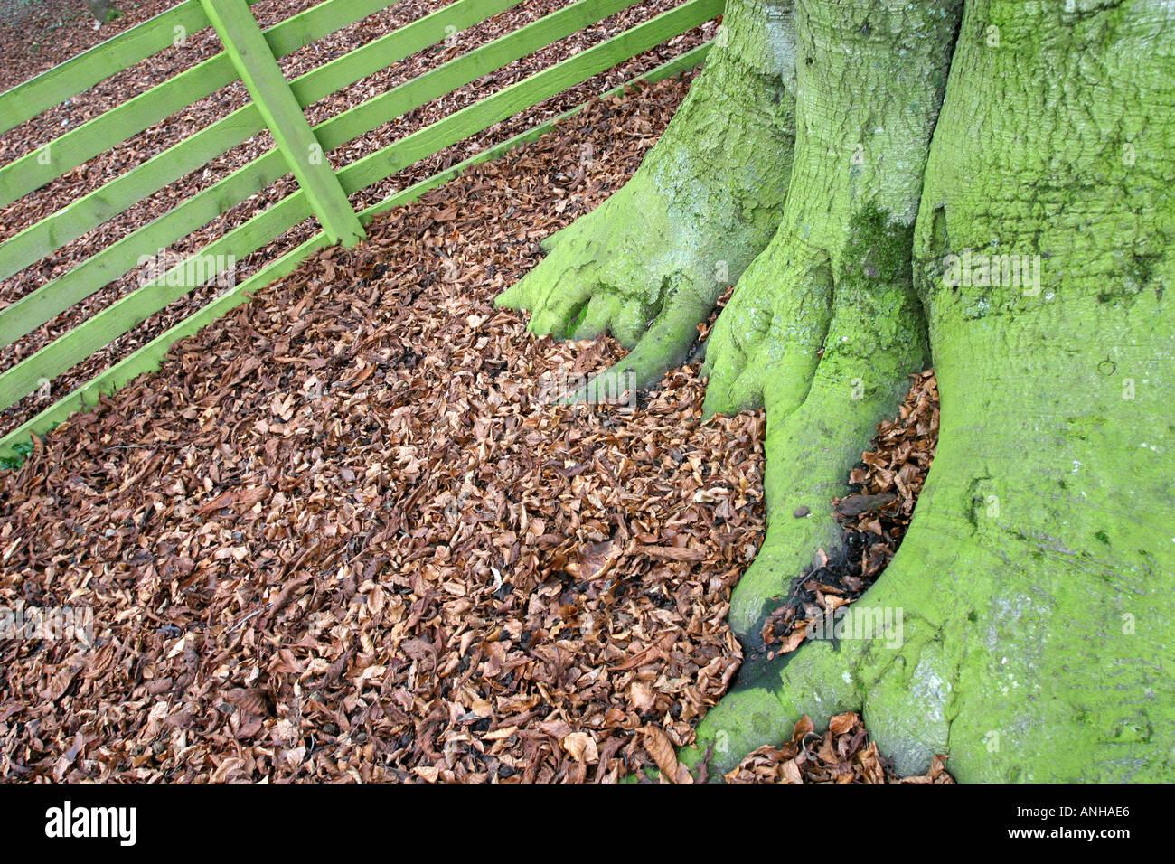 Wes Tree Stockfotos & Wes Tree Bilder Seite 5 Alamy