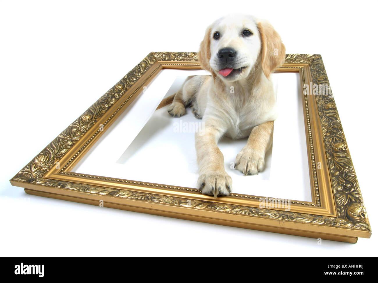 Tolle Malvorlagen Von Golden Retriever Welpen Fotos - Entry Level ...