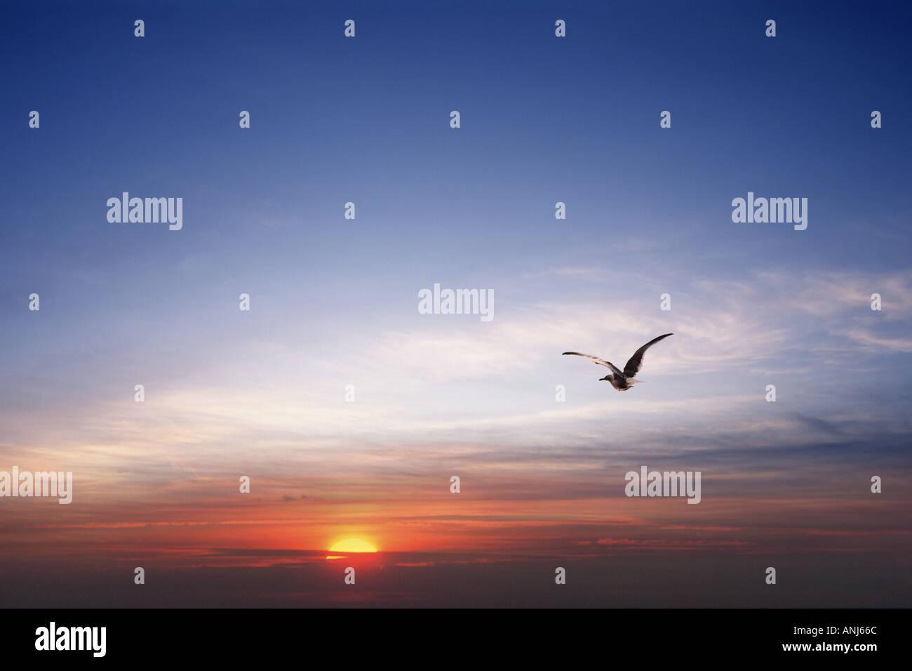Vogel fliegt in Nachthimmel Stockbild