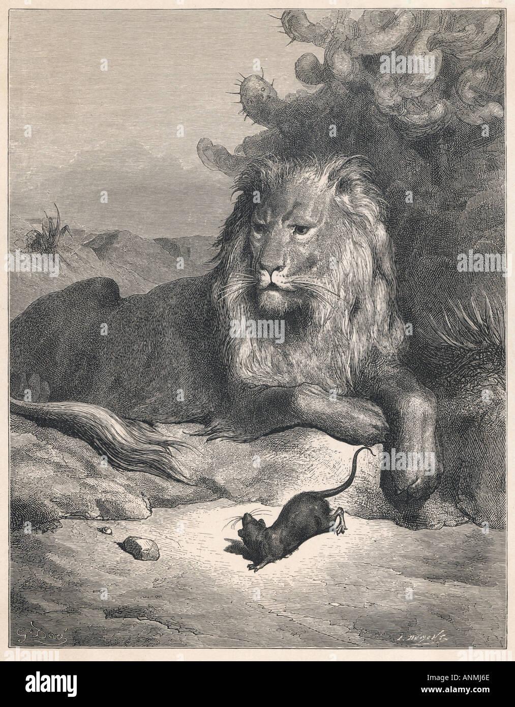 der löwe und die maus stockfotos  der löwe und die maus