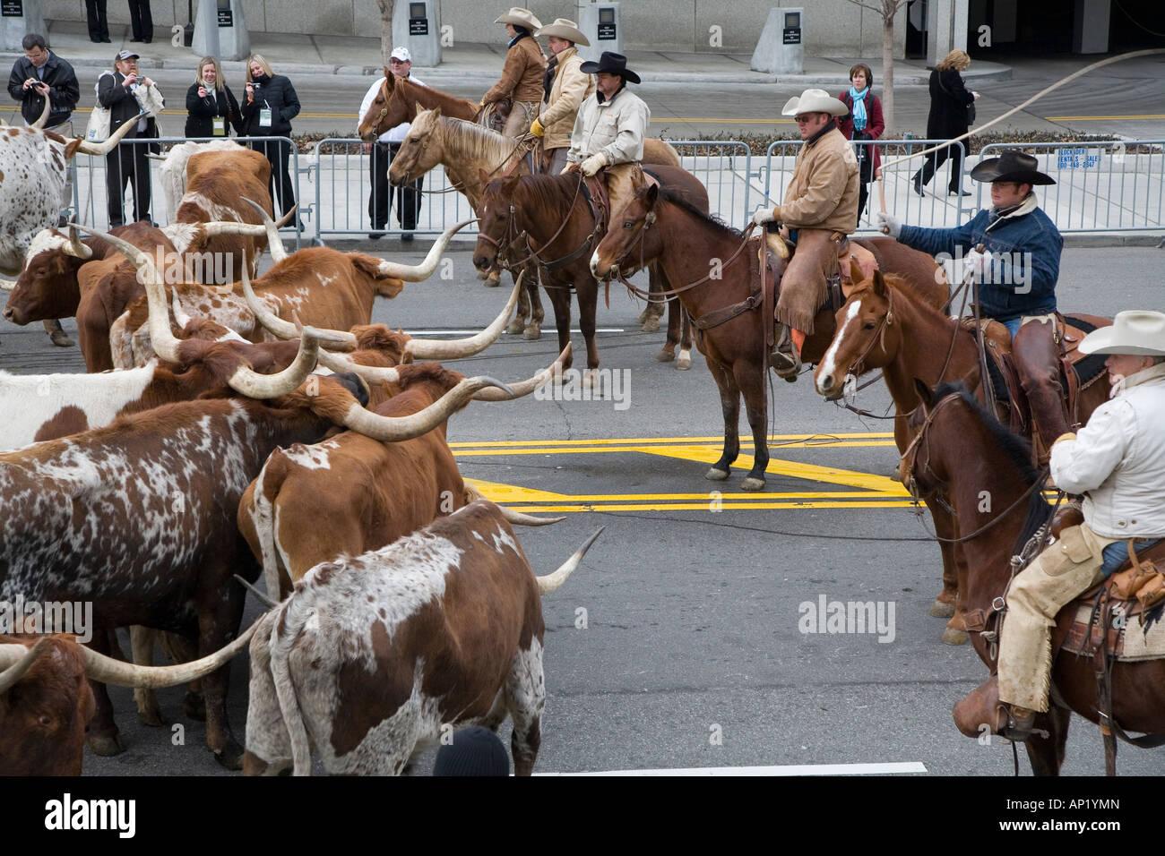 Cowboys Roundup Cattle Stockfotos & Cowboys Roundup Cattle Bilder ...