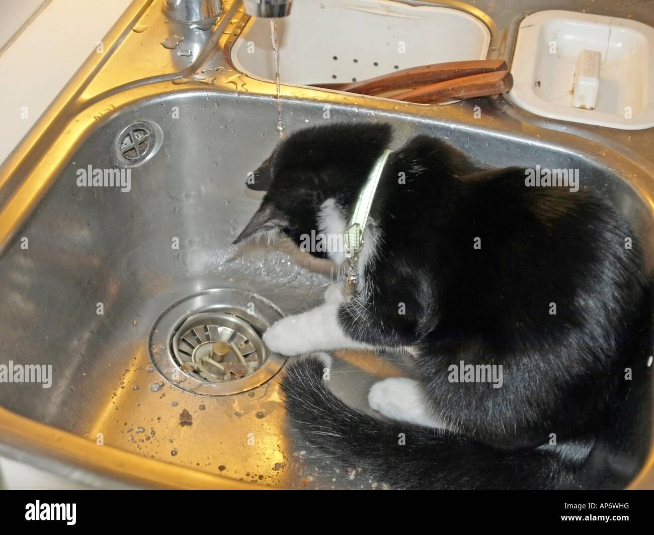 kleine schwarze und wei e katze k tzchen spielen mit wasser vom wasserhahn im waschbecken in. Black Bedroom Furniture Sets. Home Design Ideas