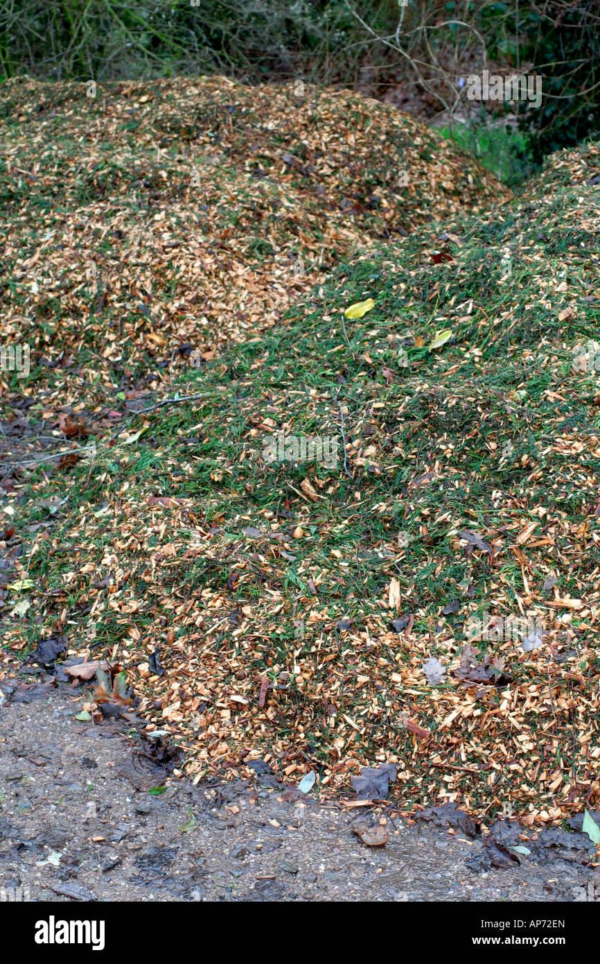 Abgebrochenen Baum beschneiden werden zum Mulchen unter etablierten Sträucher und krautige Pflanzen verwendet Stockfoto