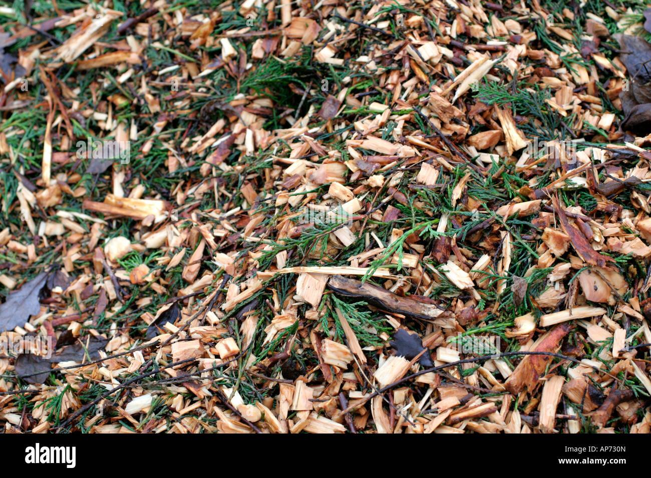 Abgebrochenen Baum beschneiden werden zum Mulchen unter etablierten Sträucher und krautige Pflanzen verwendet Stockbild