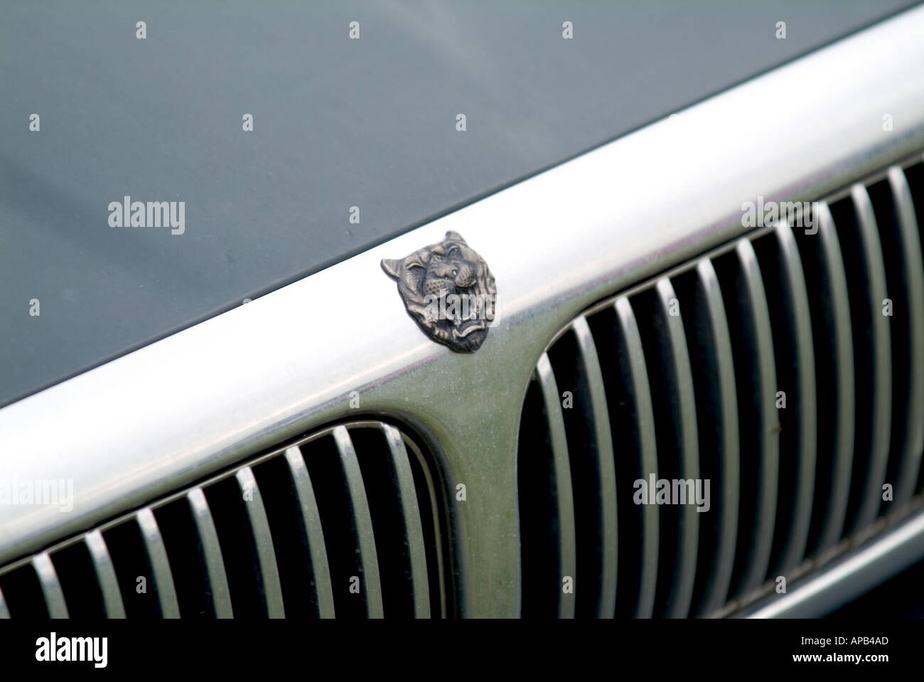 Jaguar Auto Abzeichen Luxus Ford motor Company FoMoCo Coventry England grill Englisch Stockbild