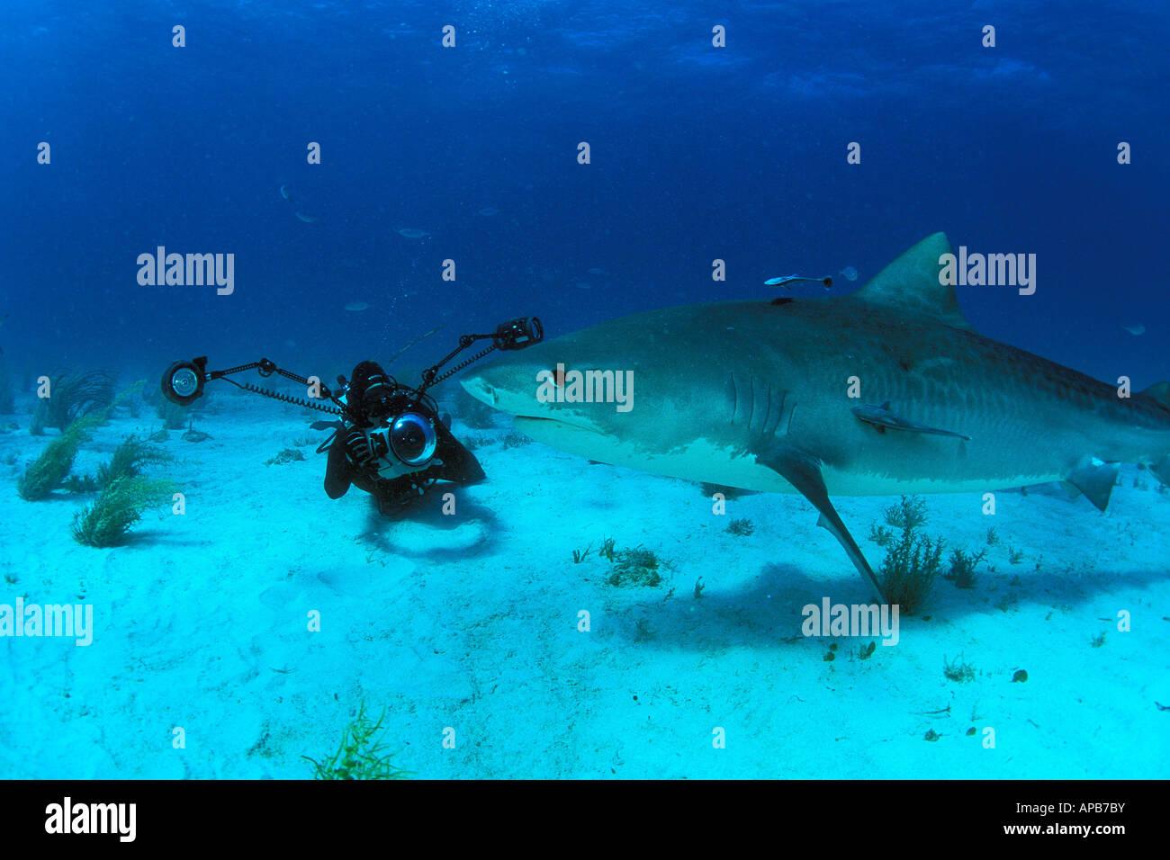 Berühmt Tigerhai Färbung Seite Bilder - Beispiel Business Lebenslauf ...