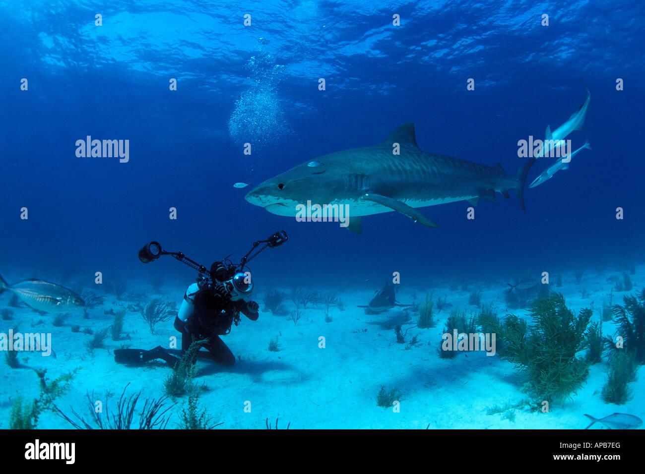 Niedlich Tigerhai Färbung Seite Bilder - Beispielzusammenfassung ...