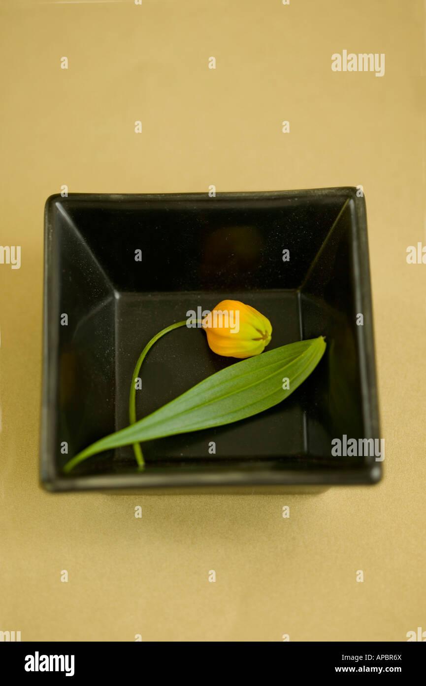 Orangenblüten einfache Stilleben quadratische Teller Blume Blatt Stockbild