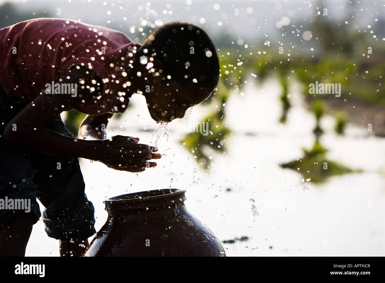 Silhouette von einem indischen Dorf junge Gesicht waschen aus einem Tontopf neben einem Reisfeld Paddy. Andhra Pradesh, Stockfoto