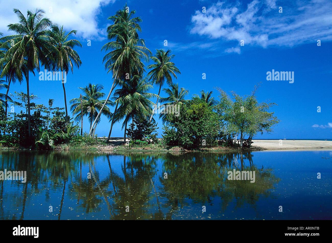 Palmenstrand Kokospalmen Westindische Inseln Tobago Karibik