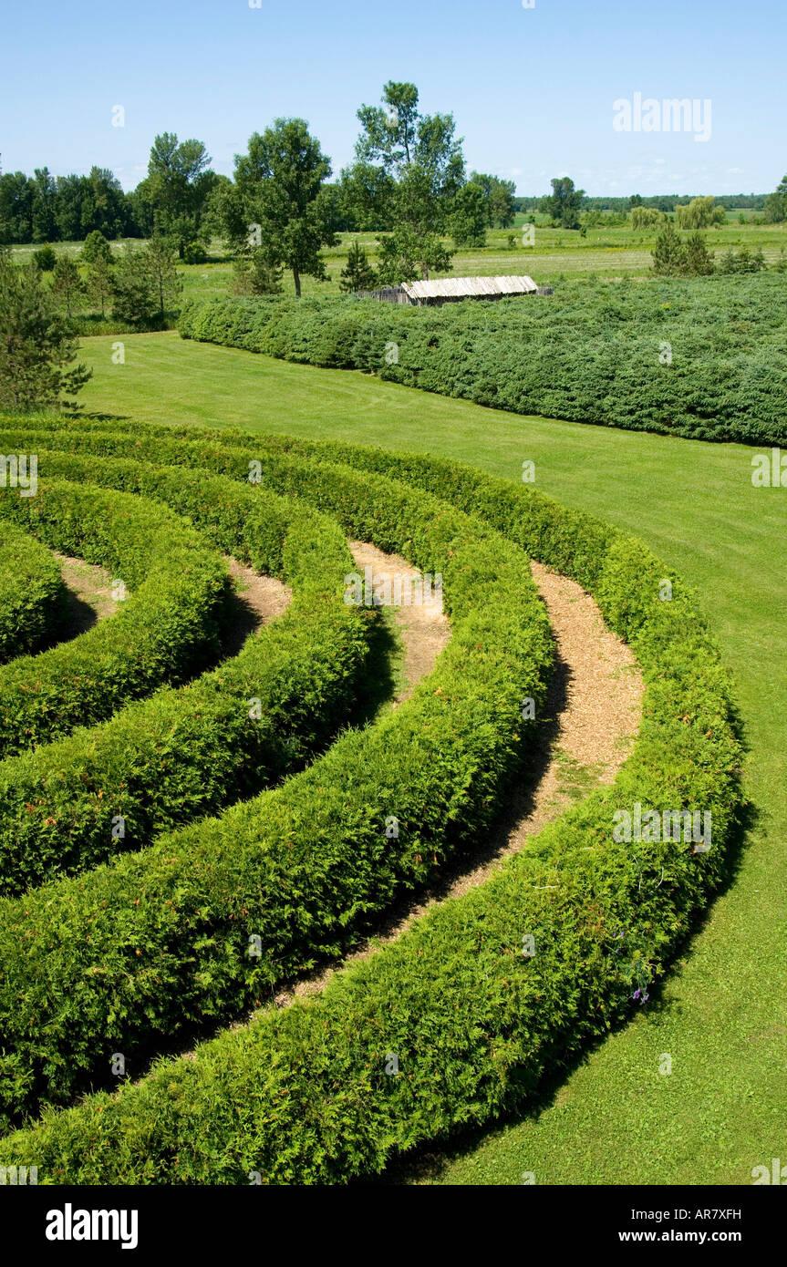 Geformte Sträucher im Garten. Stockbild