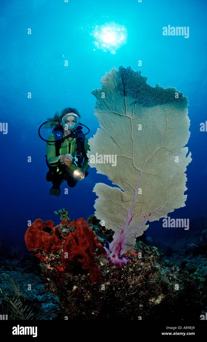 Korallenriff und Taucher Punta Cana Karibik Dominikanische Republik ...
