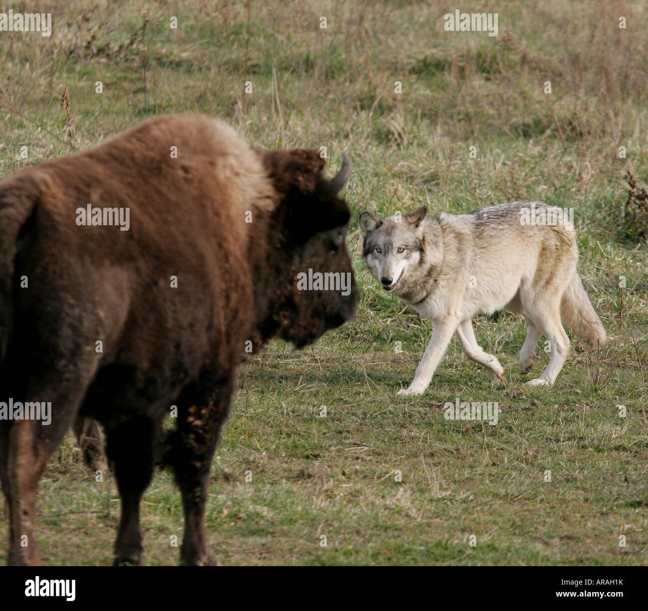 Bären und wolfspark