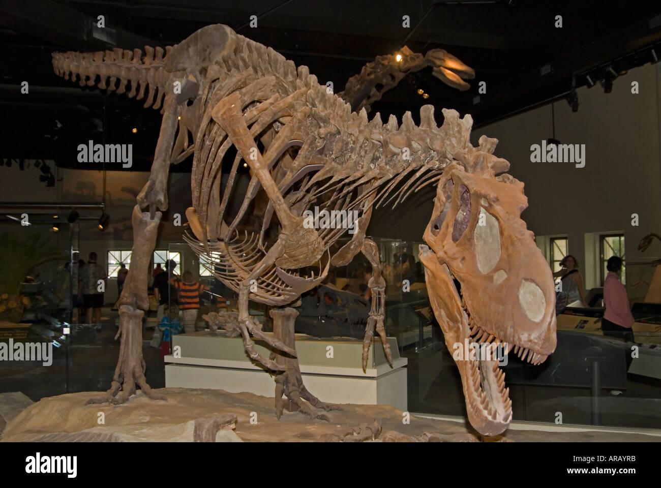 Skelett Tyrannosaurus Rex