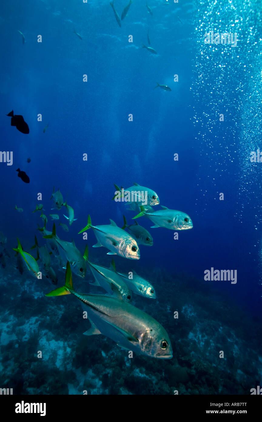 Schule-Buchsen unter Boot G-Punkt Divesite Französisch Cay Turks Caicos Islands Stockfoto