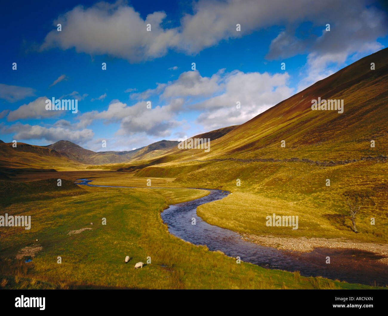 Glen Shee, Tayside, Scotland, UK, Europa Stockbild