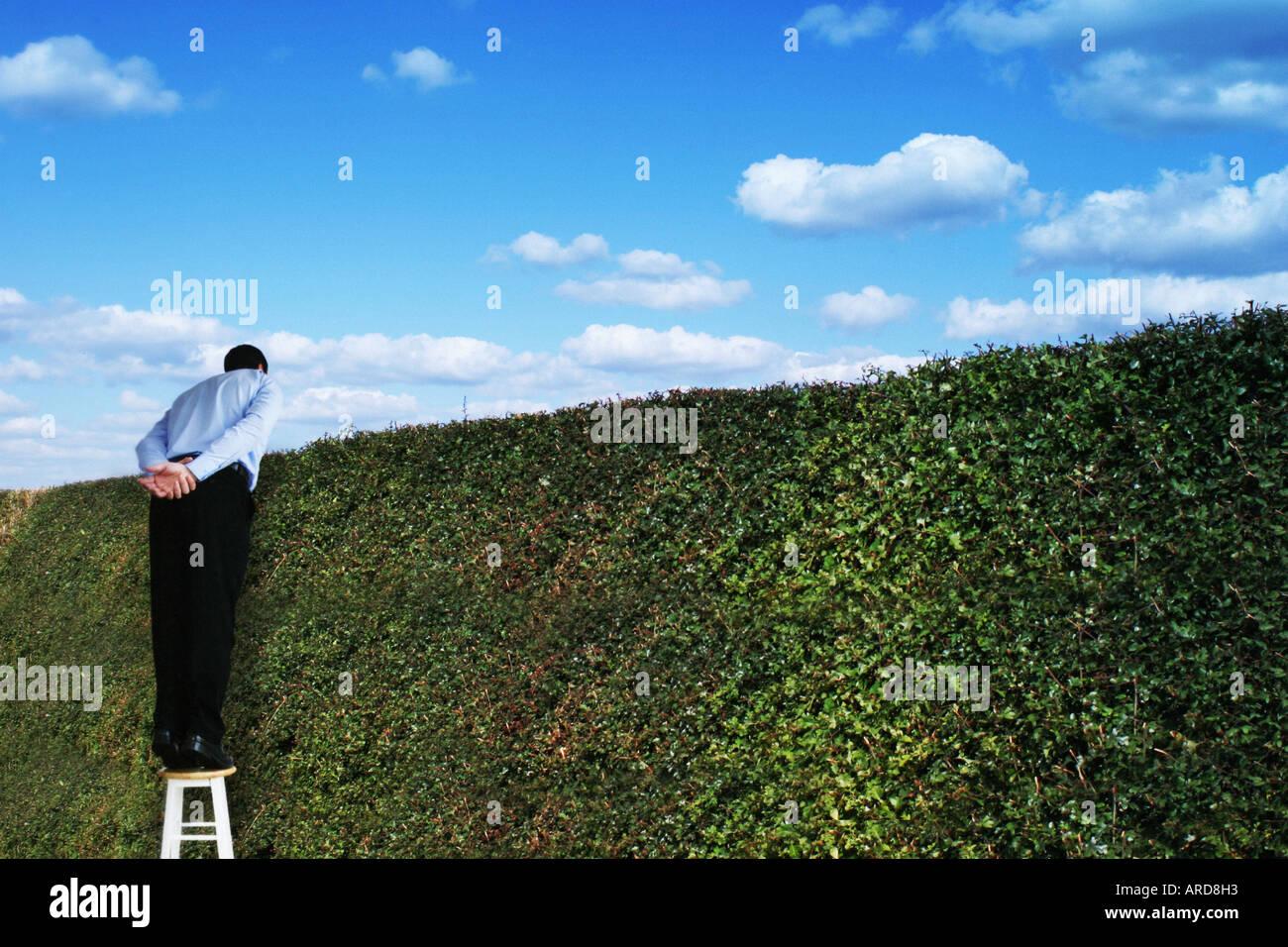 Mann stand auf einem Hocker mit Blick auf eine hohe Hecke Stockbild