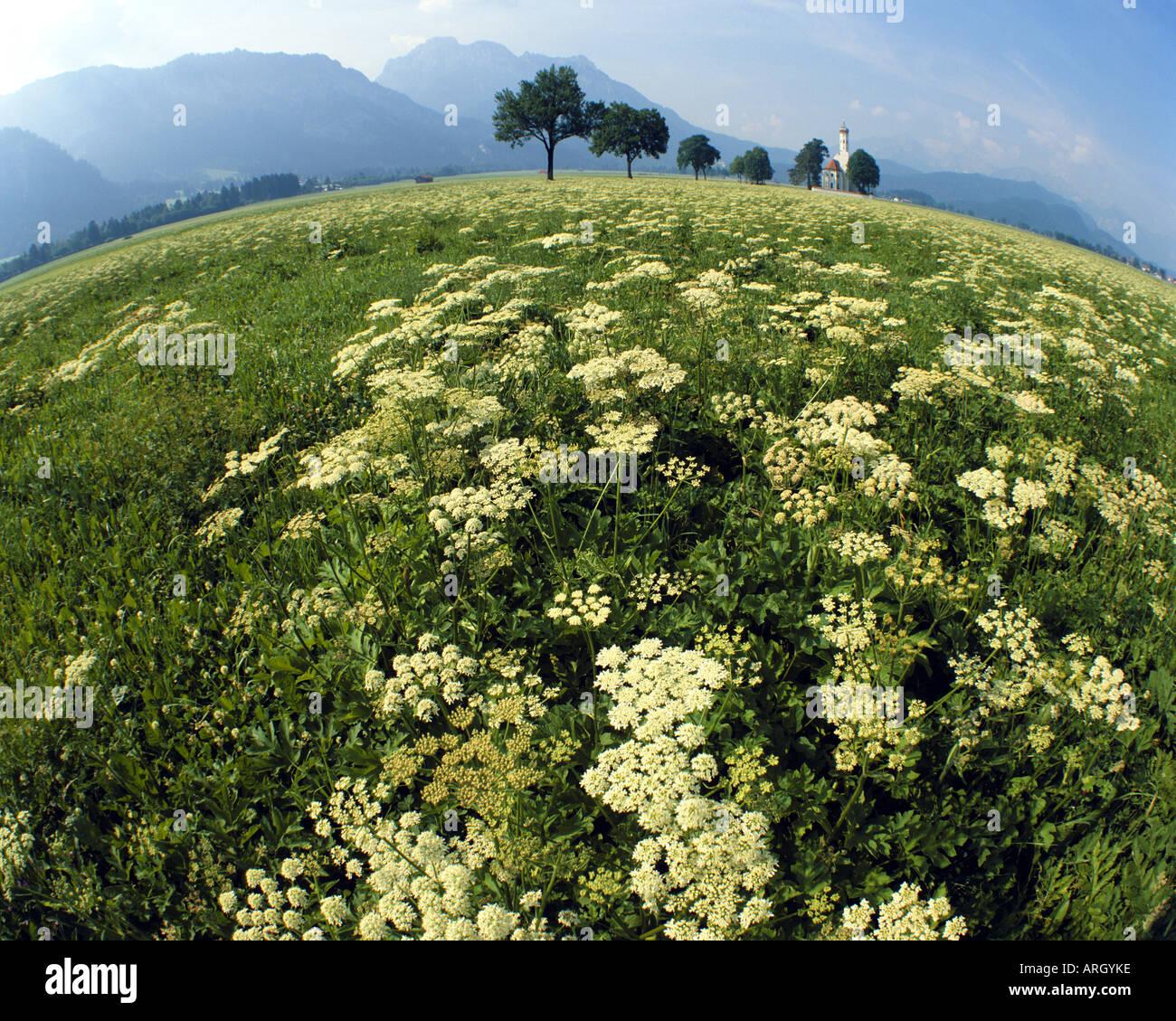 DE - Bayern: St.Coloman in der Nähe von Schwangau im Allgäu Stockbild