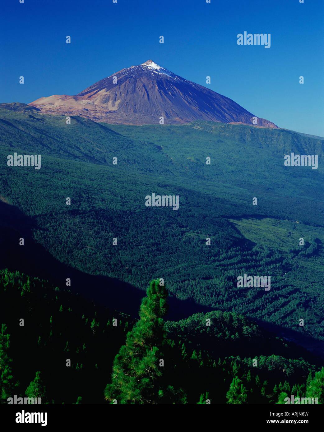Gipfel des Mount Teide und Kiefer Bäume vom Mirador Ortuno, Parque Nacional del Teide, Teneriffa, Kanarische Stockbild