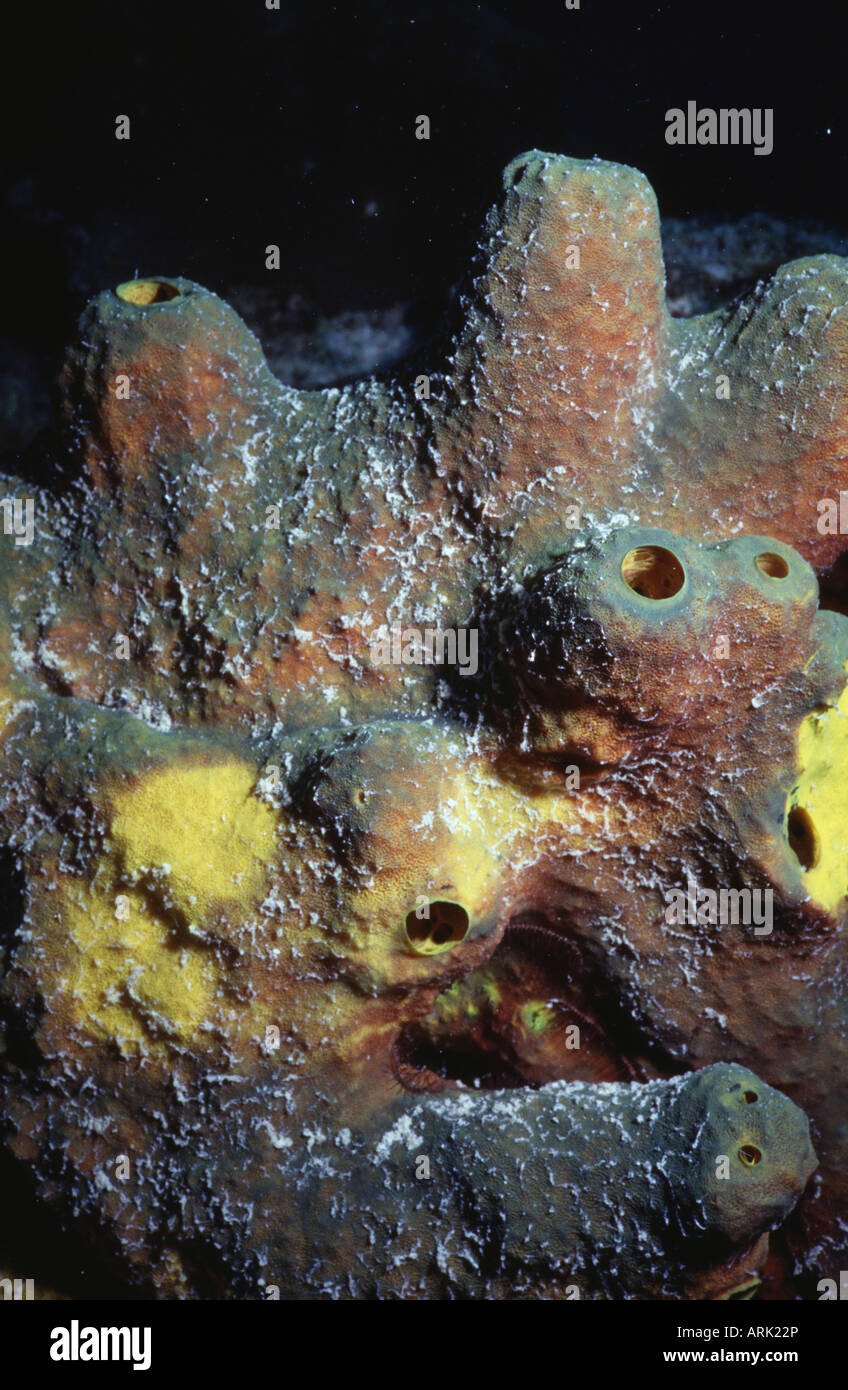 Nahaufnahme Von Einem Schwamm Unter Wasser Stockfoto Bild 16072701