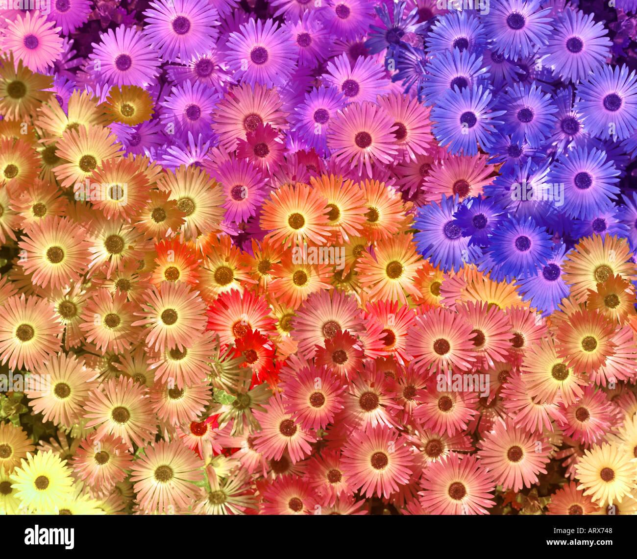 DIGITALE Kunst: Blütenpracht Stockbild