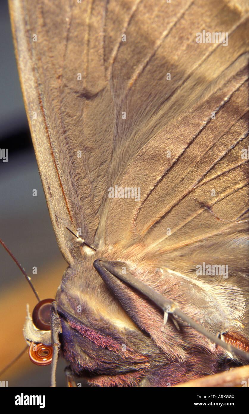 Frenulum Stockfotos & Frenulum Bilder - Alamy