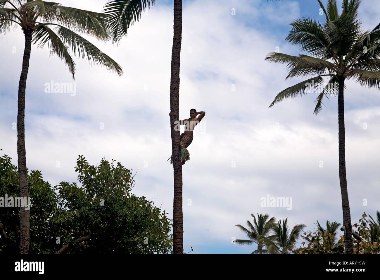 einheimische klettern palme in hawaii d nne palmen mit wei en wolke und blauem himmel stockfoto. Black Bedroom Furniture Sets. Home Design Ideas