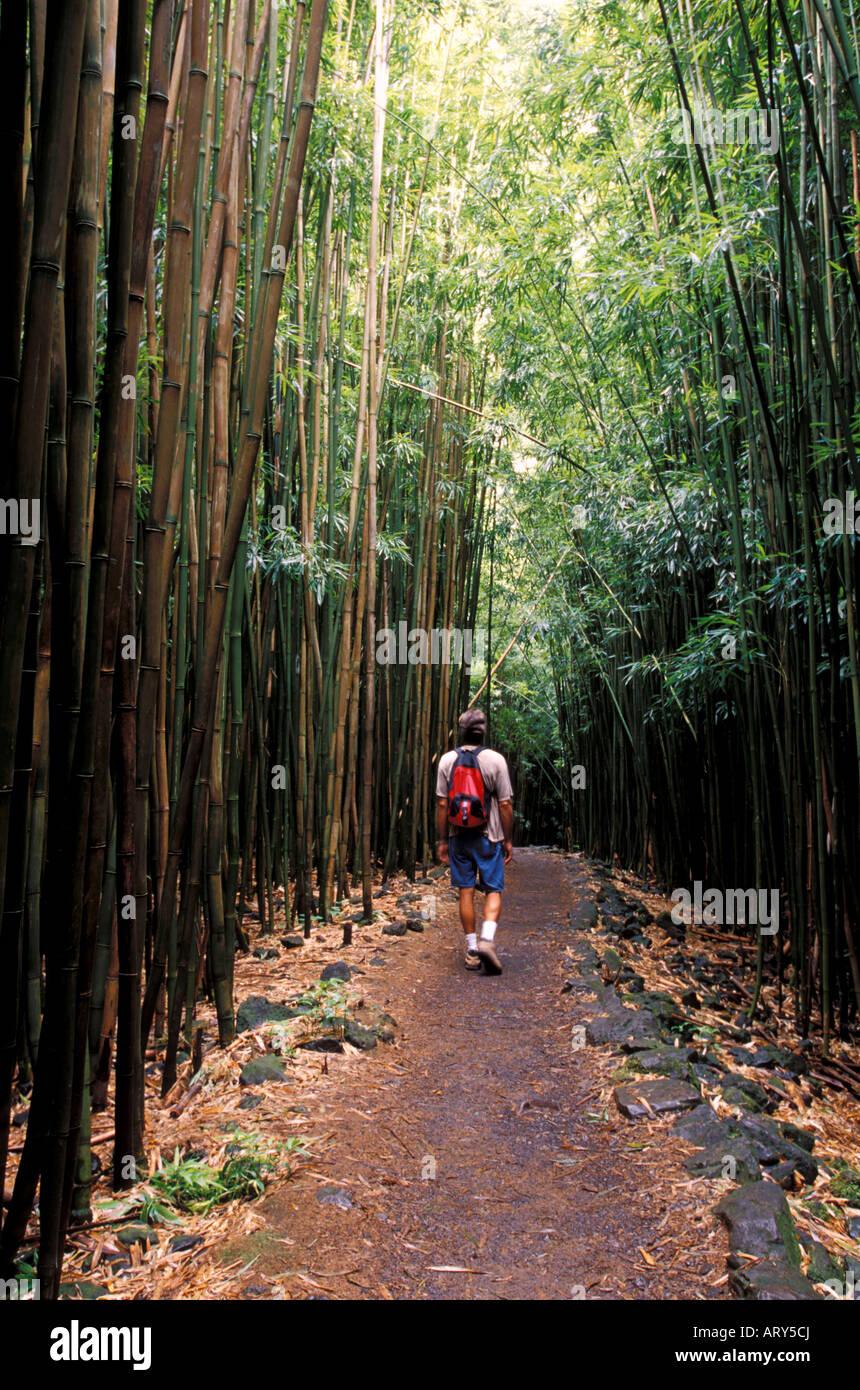 Wandern Durch Bambuswald Im Haleakala National Park Kipahulu Maui